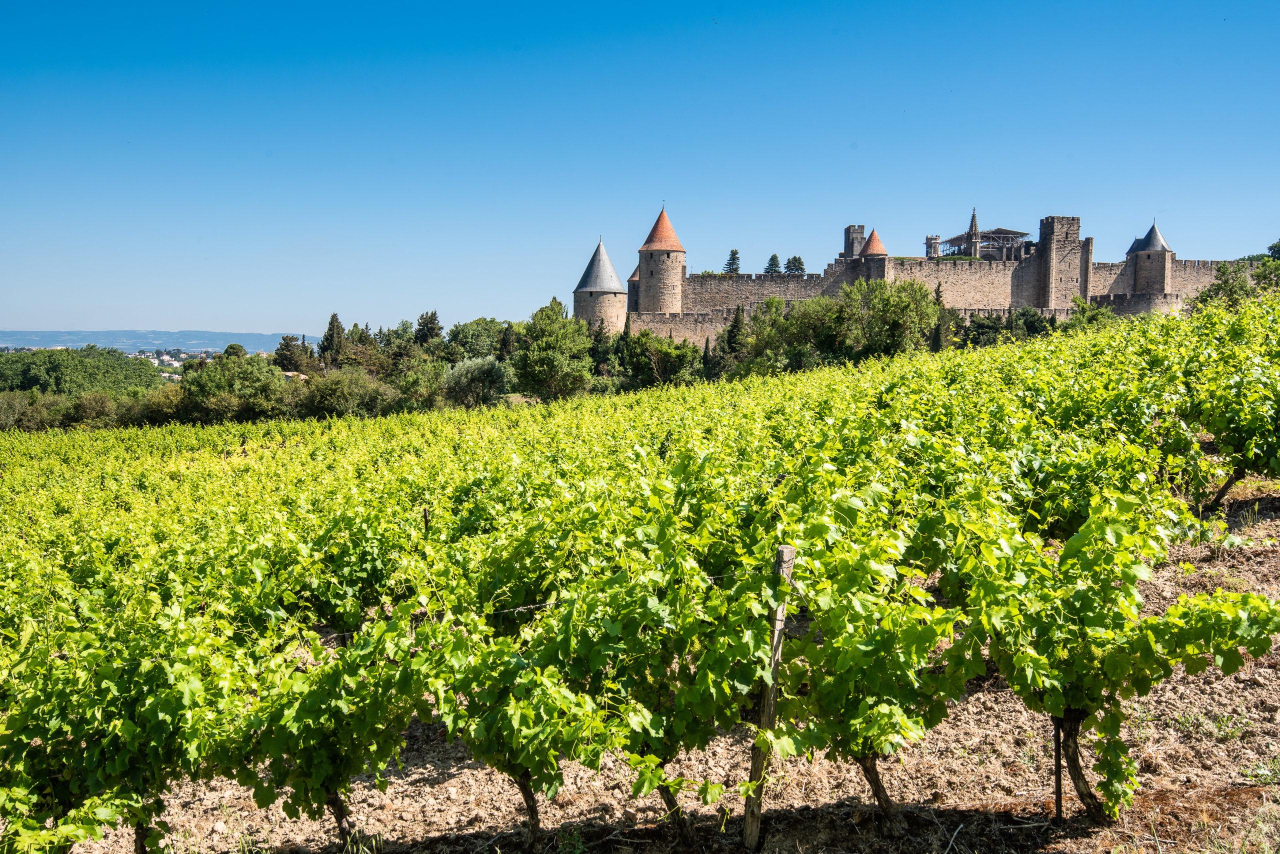 L'écrin de la Cité, Coeur de vignes
